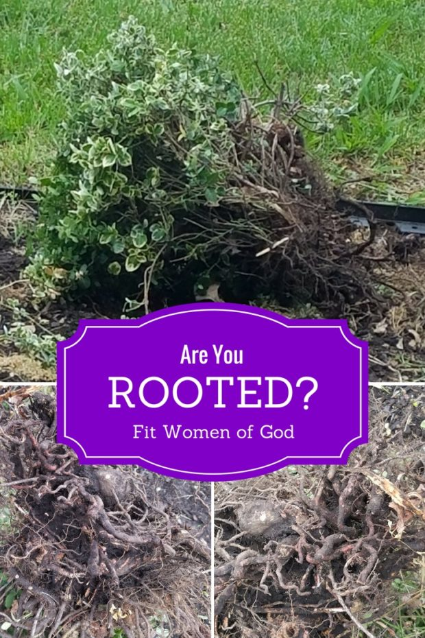 Are You Rooted?